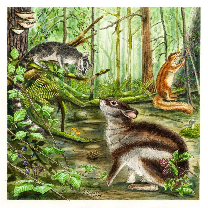 Rekonstrukcja środowiska życia prakrólika Megalagus (na dole po środku), przedstawiająca późnoeoceński las (ok. 36 milionów lat temu) w Ameryce Północnej i przedstawicieli trzech głównych grup Euarchontoglires, którzy hipotetycznie mogli się spotkać po raz ostatni w tym czasie. Prymitywny naczelny z grupy Plesiadapiformes (Ignacius, na lewo, na gałęzi drzewa), zajęczak Megalagus oraz gryzoń z grupy Ischyromyidae (Ischyromys, na prawo). Rys. Agnieszka Kapuścińska.