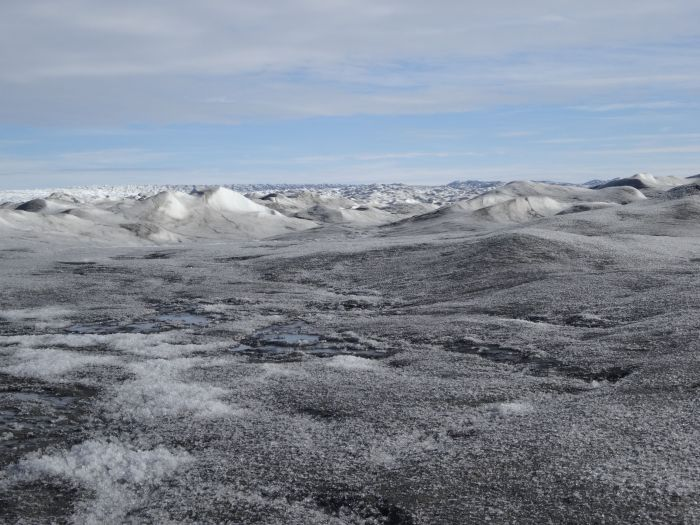 Kriokonit - ciemny osad na lodowcu. fot. K. Zawierucha.