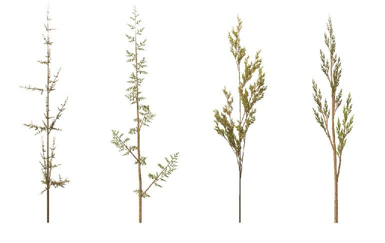 Fraktalne trawy, w ktorych każda gałązka wygląda jak pomniejszona całość. Autor: Solkoll, Wikipedia