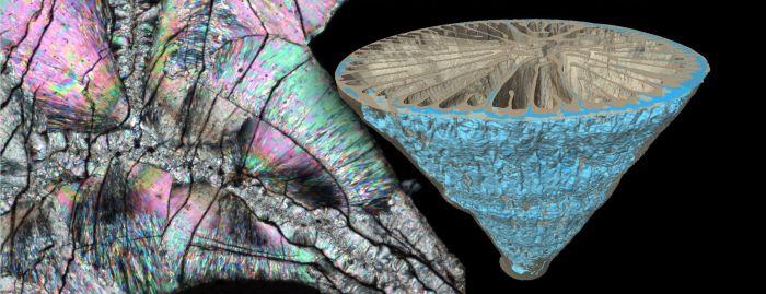Głębokowodny osobniczy koralowiec Paraconotrochus antarticus tworzy szkielet zbudowany z dwóch odmian węglanu wapnia - kalcytu i aragonitu. Minerały te z uwagi na różną gęstość da się zobrazować w tomografie komputerowym (po prawej na niebiesko znaczony wewnętrzny, kalcytowy składnik szkieletu). Cienka płytka szkieletu w mikroskopie polaryzacyjnym mieni się wszystkimi barwami tęczy, ale widoczna jest też granica między środkową częścią kalcytową i zewnętrzną aragonitową.  [Ilustracja: Jarosław Stolarski, Katarzyna Janiszewska]