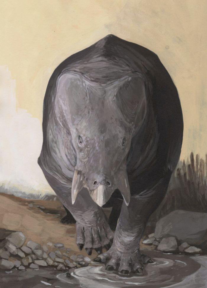 Artystyczna wizja tego, jak mógł wyglądać Lisowicia bojani, dicynodont, którego szczątki znaleziono na Śląsku. Rys: Karolina Suchan-Okulska