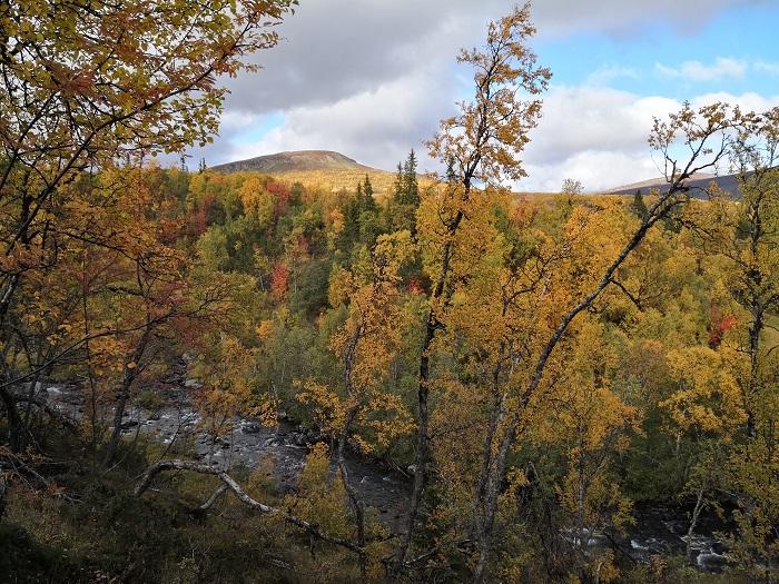 Zielona Wstęga Lasów Skandynawskich, fot. G. Mikusiński