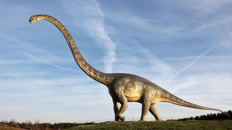 Znalezione obrazy dla zapytania dinozaury