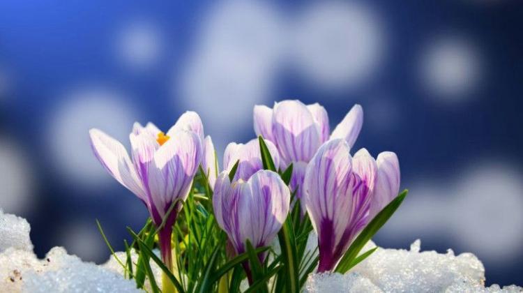 W środę - początek astronomicznej wiosny | Nauka w Polsce