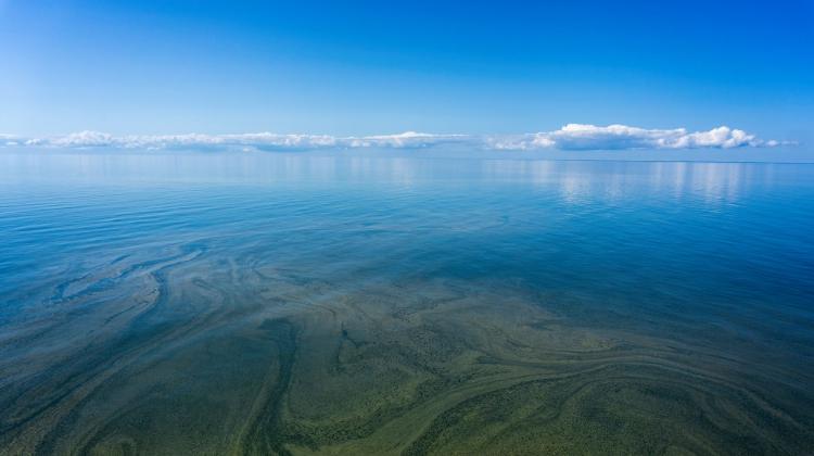 plankton | Nauka w Polsce